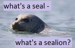 seal facts