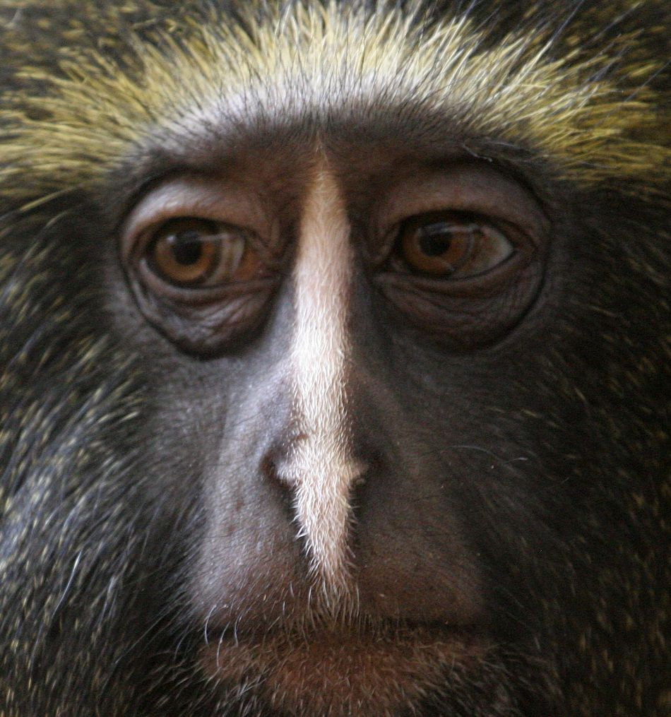 Animal Extreme Close-up - Owl face monkey