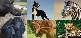 collage of favorite animals