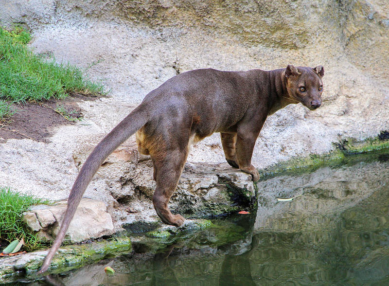 fossa by a stream
