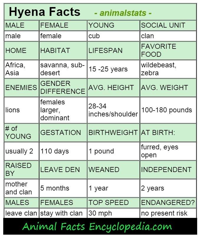 hyena animal stats