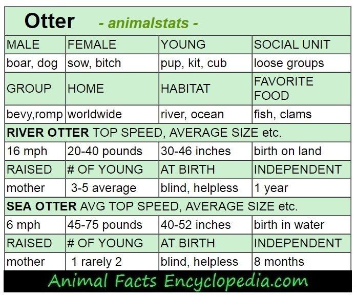 beaver animal stats