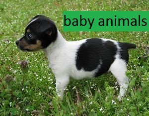 a puppy in the grass