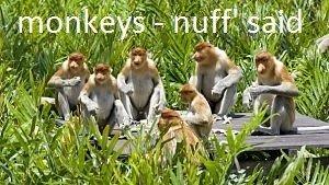 monkey facts